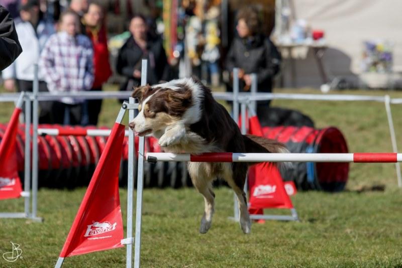 agility for fun