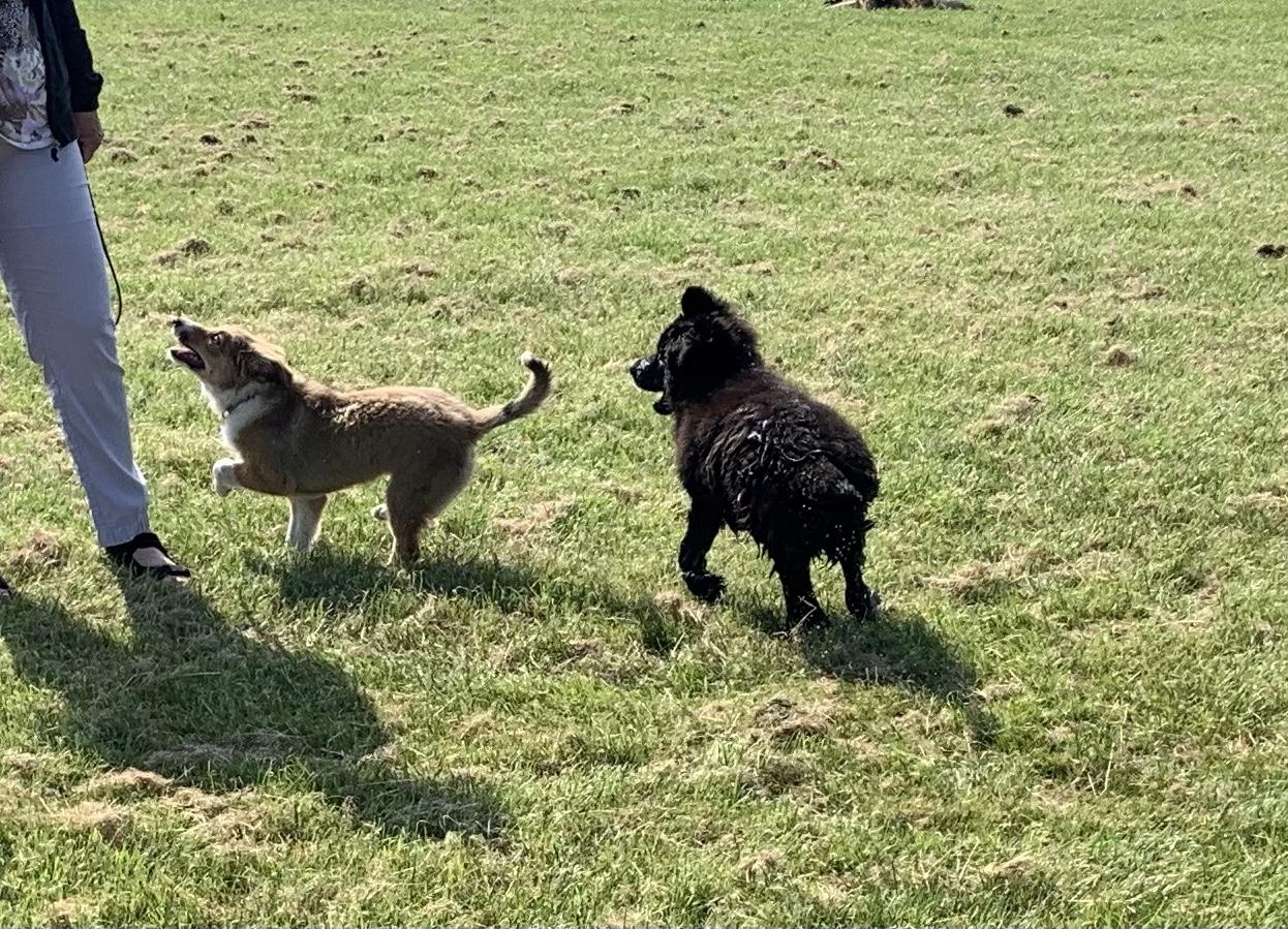 Puppy plezier